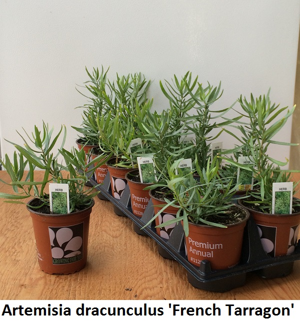 Tarragon Image